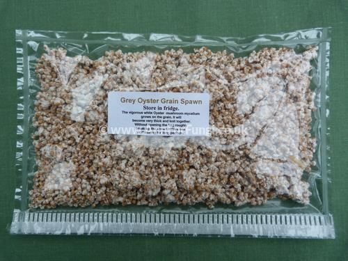 Ann Miller's Speciality Mushrooms   Oyster Grain Spawn